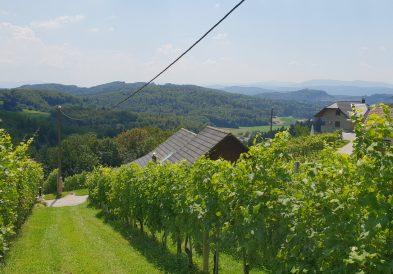 Vinograd zidanice Meglic